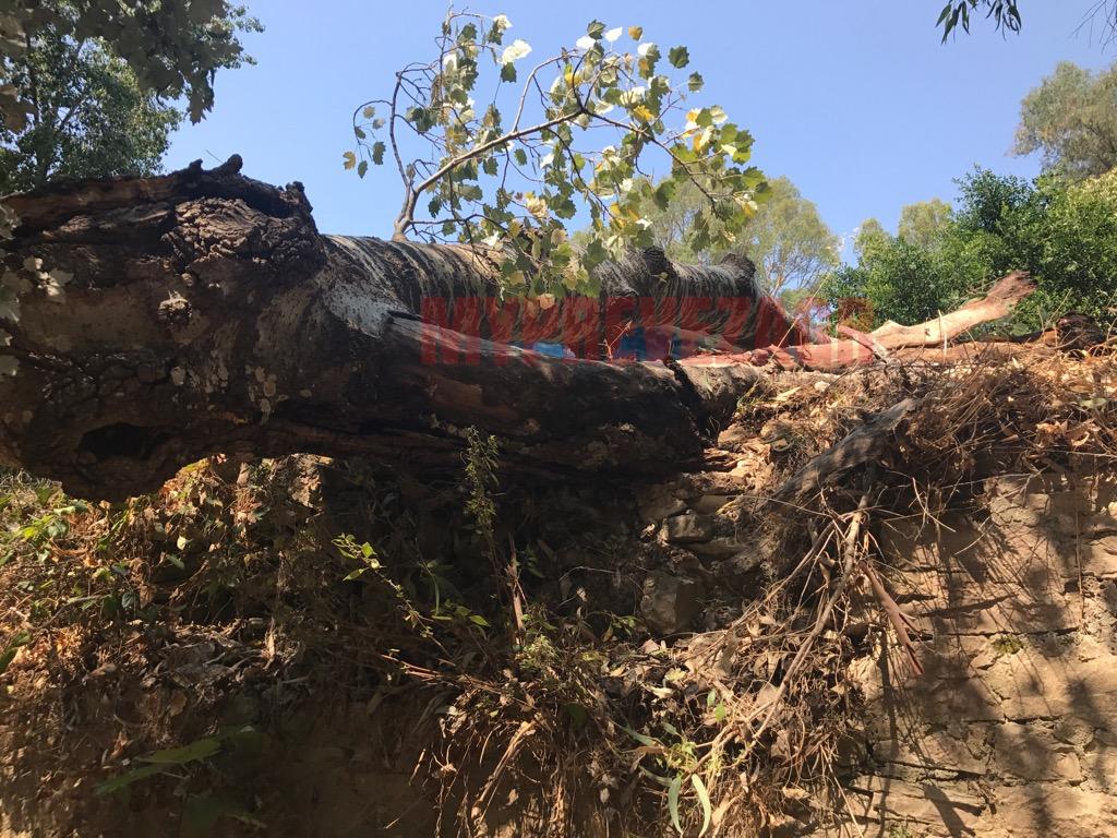 Πρέβεζα: Πτώση δένδρου στην Κυανή Ακτή