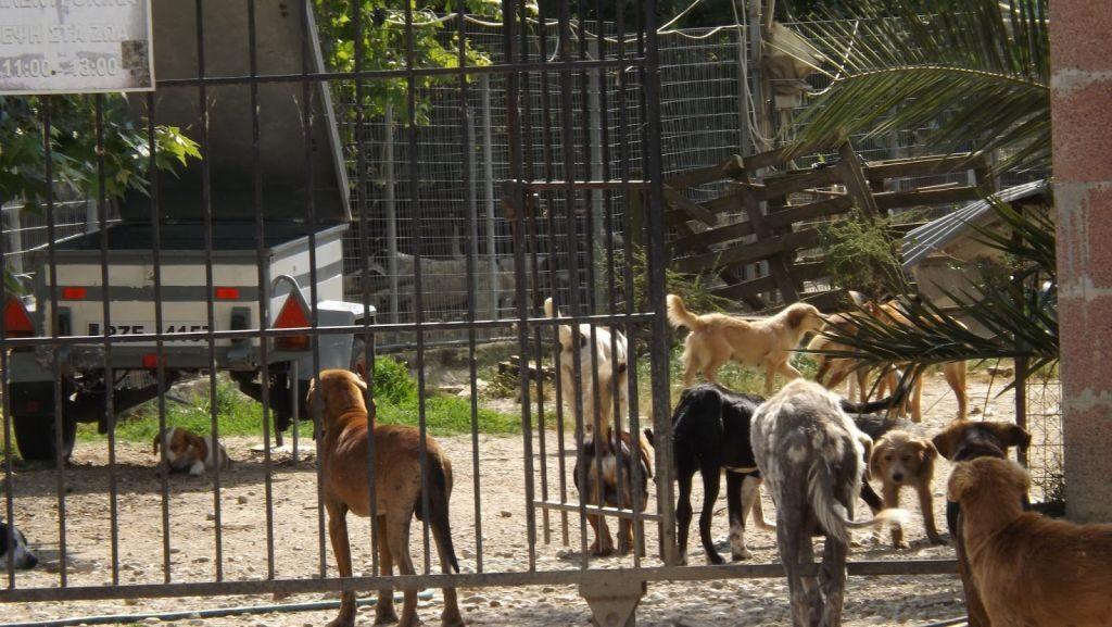 Πρέβεζα: Ανακλήθηκε η άδεια λειτουργίας του καταφυγίου αδέσποτων ζώων του Δήμου Πρέβεζας
