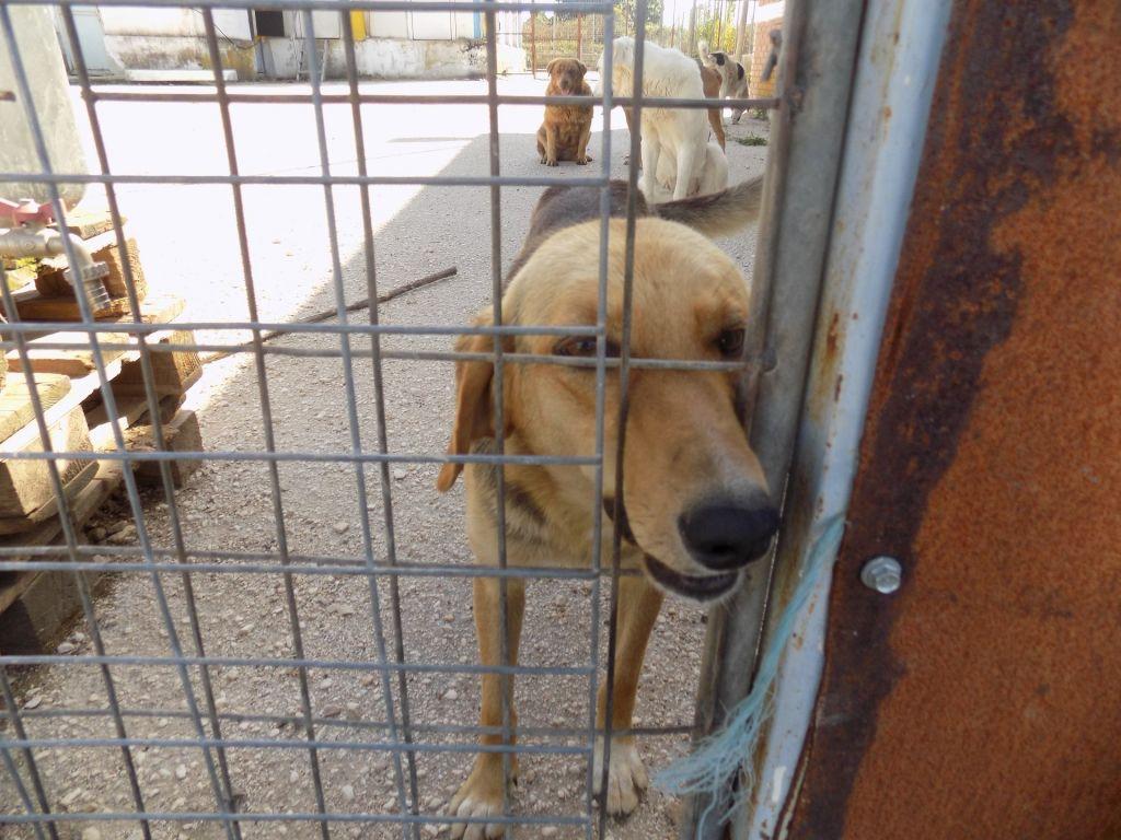 Χρηματοδότηση στο Δήμο Πρέβεζας για το καταφύγιο αδέσποτων ζώων