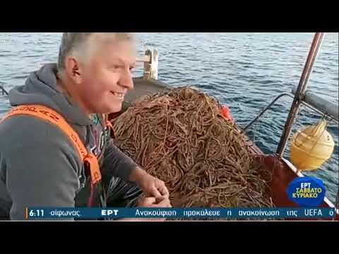 Πρέβεζα: Ξημέρωμα στον Αμβρακικό, μαζεύοντας τα δίχτυα με τη γάμπαρη